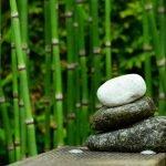 Co warto wiedzieć o pięknych i egzotycznych bambusach?