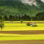 Czym jest Hektar? 1 hektar ile to m2 – jak przeliczać jednostki