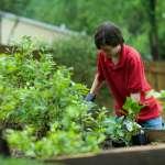 Jak ekologicznie dbać o ogród?