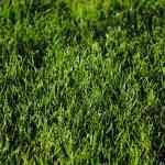 Sposoby na przesuszony trawnik w ogrodzie